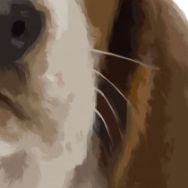 Detail of Basset Hound Puppy Large Size Painting